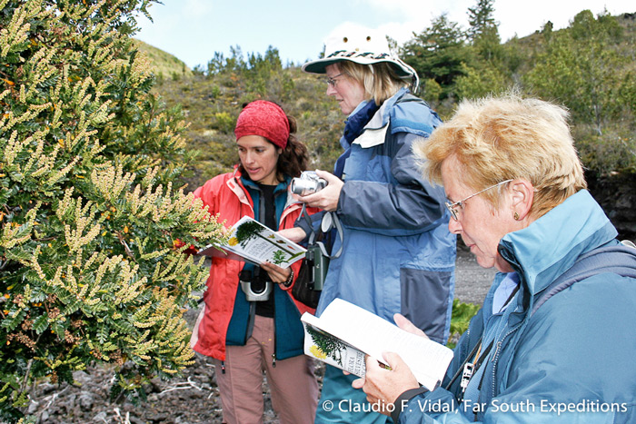 Botanizing in the Andean foothills at Puyehue National Park © Claudo F. Vidal, Far South Expeditions