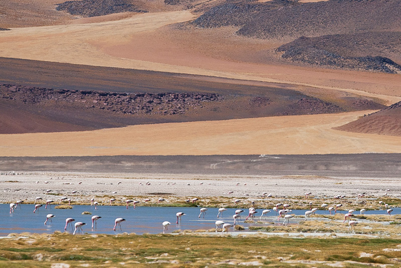 Flamingos at Salar de Pujsa © Enrique Couve, Far South Exp