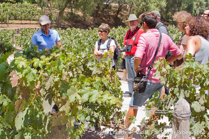 During this trip, we will visit several wineries in the best-known wine-producing valleys of Chile and Argentina © Claudio F. Vidal, Far South Expeditions