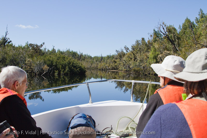 Searching for Southern River Otter at Chepu River, Chiloe Island