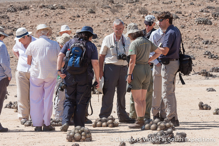 Studying the Copiapoa cacti at Pan de Azucar National Park, Atacama, Chile © Claudio F. Vidal, Far South Exp