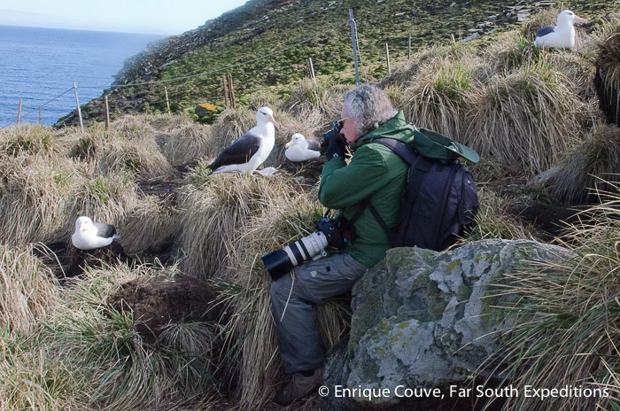 Photographing albatrosses at West Point Island © courtesy of guest Alex Macipe