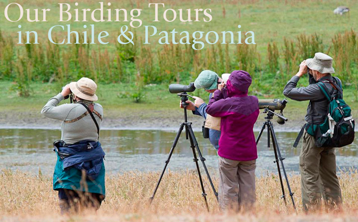 Our Birding Tours in Chile & Patagonia