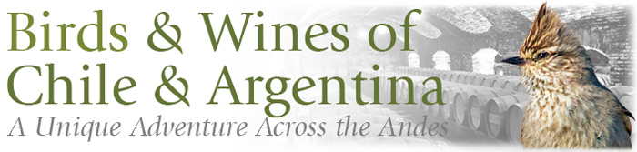 Birds & Wines of Chile & Argentina: A Unique Adventure Across the Andes