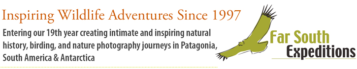 Far South Expeditions, Inspiring Wildlife Adventures Since 1997. Entering our 19th year creating intimate and inspiring natural  history, birding, and nature photography journeys in Patagonia, South America & Antarctica.