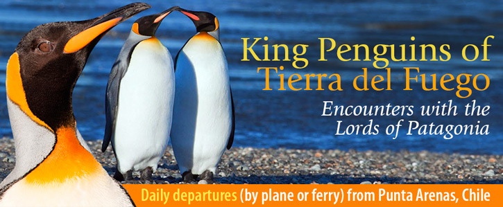 King Penguins of Tierra del Fuego, Encounters with the Lords of Patagonia