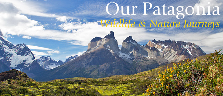 Our Patagonia Wildlife & Nature Journeys