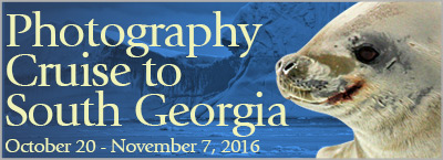Photography Cruise to South Georgia - October 20 to November 7, 2016