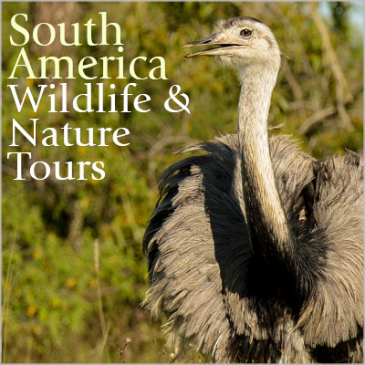 South America Tours