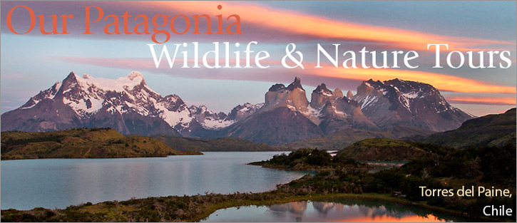 patagonia-nature-and-wildlife-tours