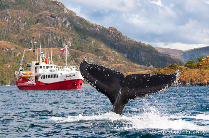 Whale-watching in the Magellan Straits aboard M/V Forrest