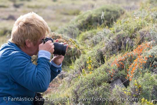 Admiring the myriad of flowers that cover the steppes and scrub of Patagonia © Fantástico Sur Expeditions
