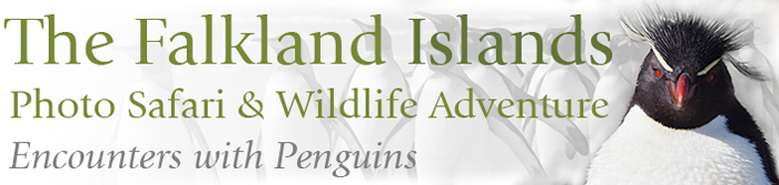 The Falkland Islands, Photo Safari & Wildlife Adventure © Far South Expeditions