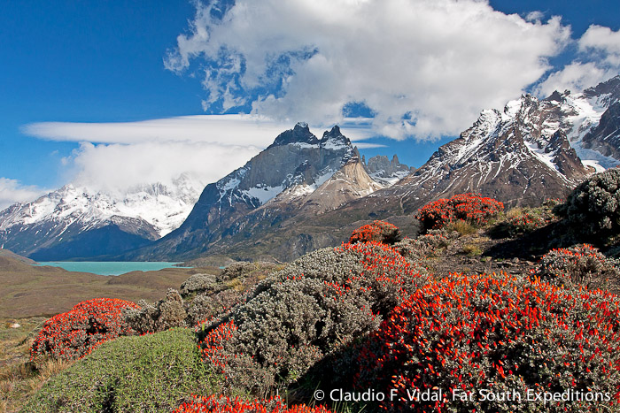 Anarthrophyllum desideratum, Torres del Paine National Park © Claudio F. Vidal, Far South Expeditions