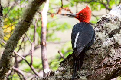 Day Tour: Birding the Magellan Straits